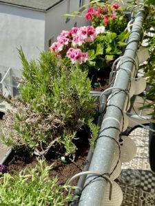 Der Frühling kommt (bestimmt) – Pflege anpassen